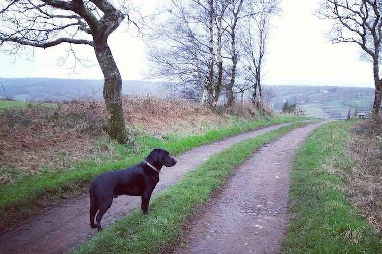 dog walking from Odle Farm