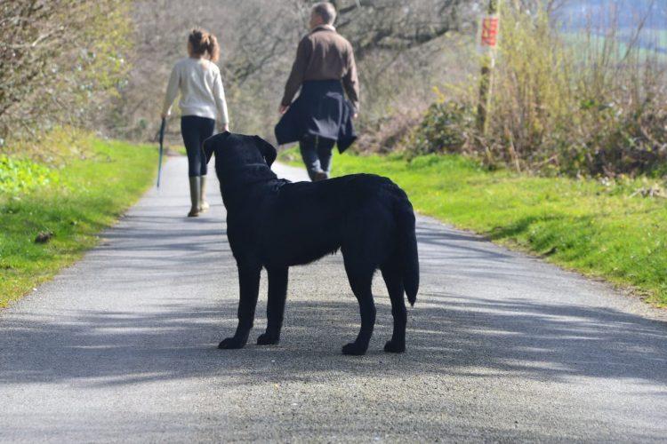 Plenty of local walks