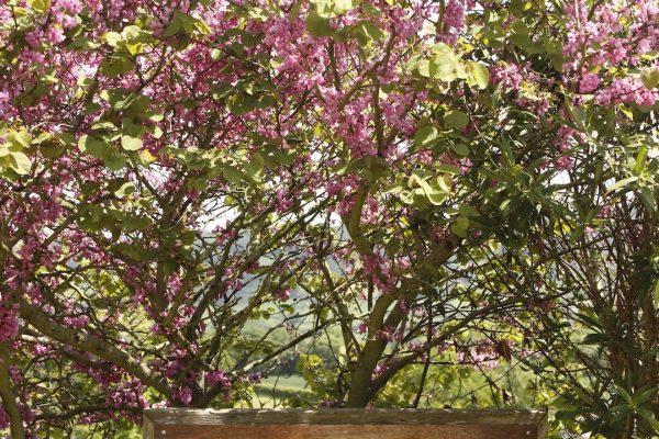 Odle Farm - Gardens and views 4