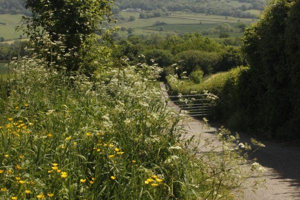 Odle Farm - Gardens and views 5