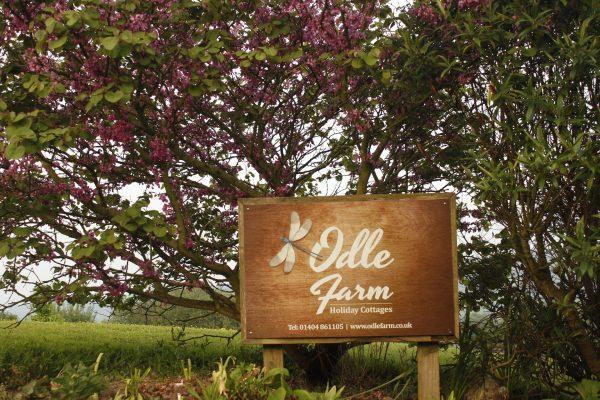 Odle Farm - Gardens and views 9